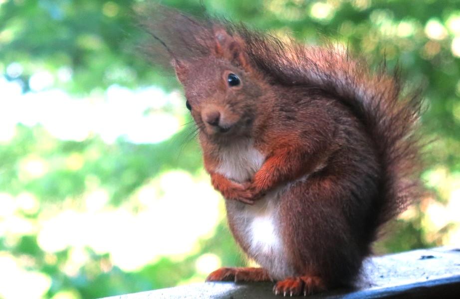Ecureuils observé depuis une de nos cabanes dans les arbres