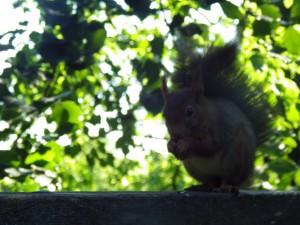 ecureuil cabane zen