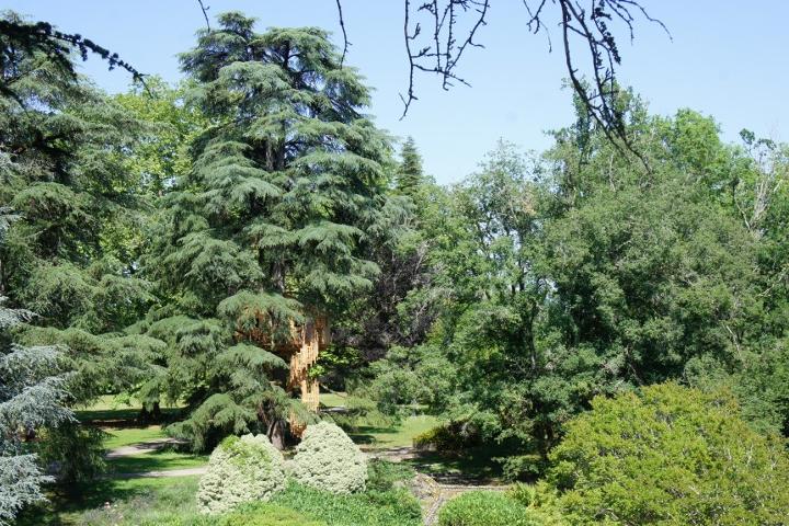 cabane-perchee-arbres